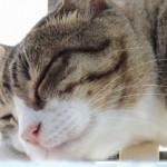 猫と赤ちゃんの同居アレルギー対策は?新生児期の注意と工夫