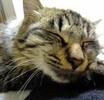 節分の豆は猫は食べれるか