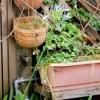 春に植える野菜プランターなら?家庭菜園初心者向けと土作りポイント