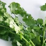 パクチーの栄養や効能が凄い!美味しい食べ方とデトックスレシピ